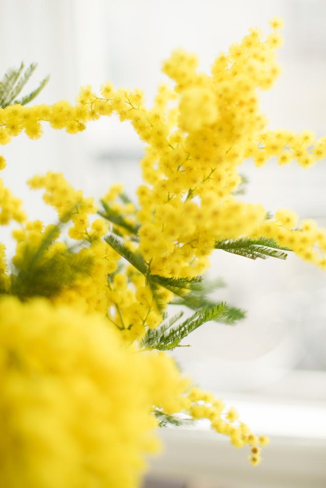 make-my-lemonade-mimosa-cake-BLOG-7